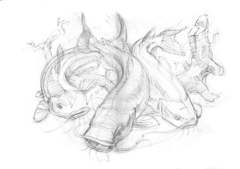 catfish-sketch